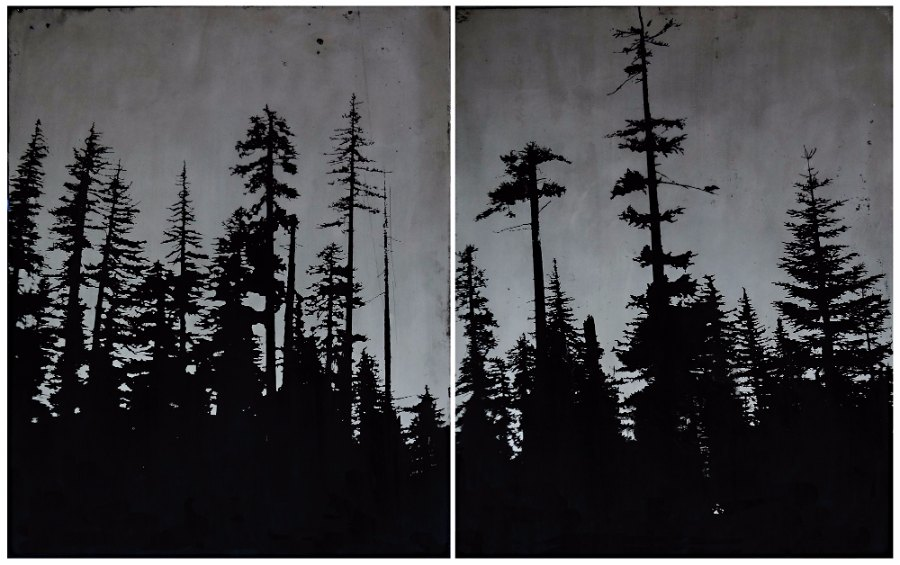 Acid etched art on steel panel of evergreen trees in the Mt. Hood National Forest by artist Garrett Price